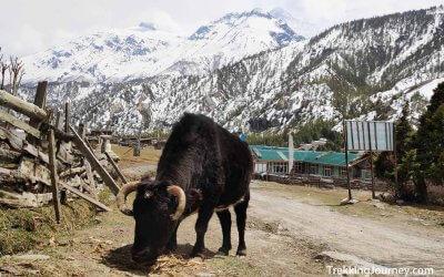 尼泊爾徒步秘辛 | 健行費用貴不貴?登山嚮導怎麼找?這篇為你揭曉!