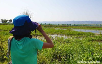 Chitwan奇旺國家公園:景點怎麼樣| 門票行程、交通資訊 +便宜玩法|我的叢林safari心得整理