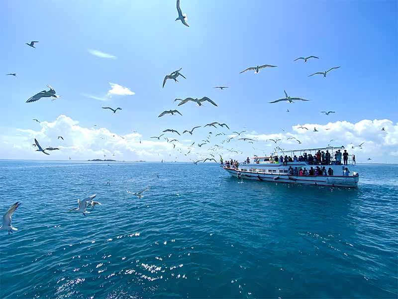 澎湖東海餵燕鷗