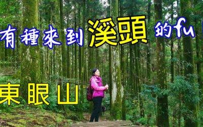 【桃園。東眼山】 有種來到「溪頭」的fu!(內含門票優惠/行前須知)